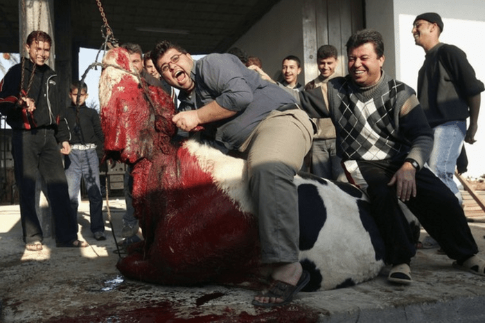 Muslims love to watch animals die in agony while they are being halal-slaughtered