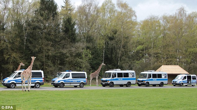 Police preferred to sleep in their vans among the giraffes at a zoo