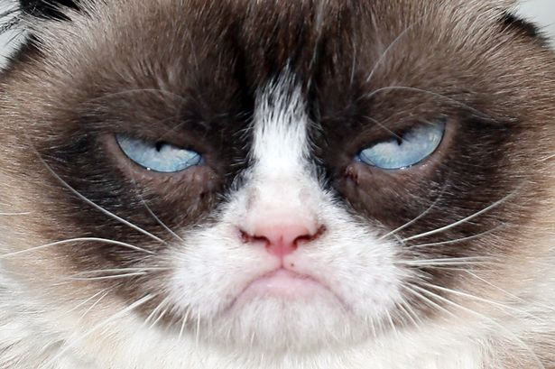 GrumpyCat-vi