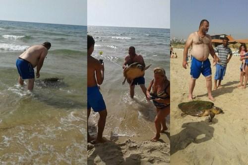 Sea-Turtel-Lebanon-1-1