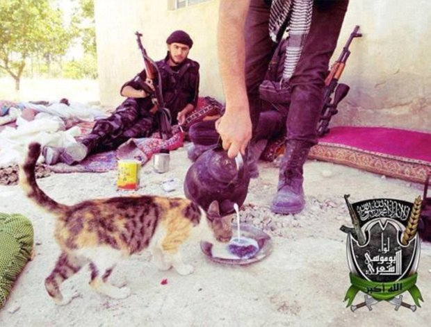 ISIS issue fatwa against CATS credit: Twitter
