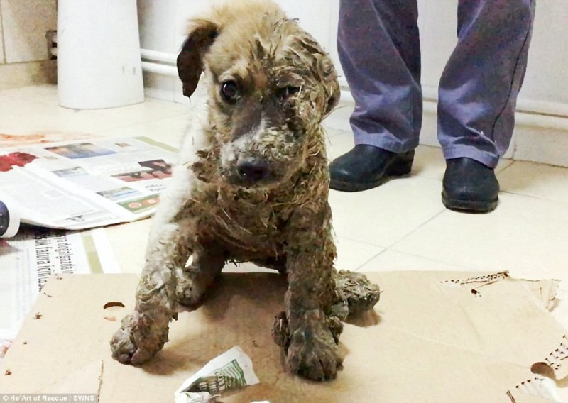 3a842ce600000578-3950184-the_heartbreaking_pictures_of_pascal_the_puppy_show_him_in_horri-a-52_1479489396559