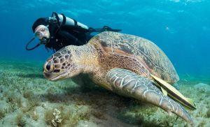 Interact With Marine Wildlife
