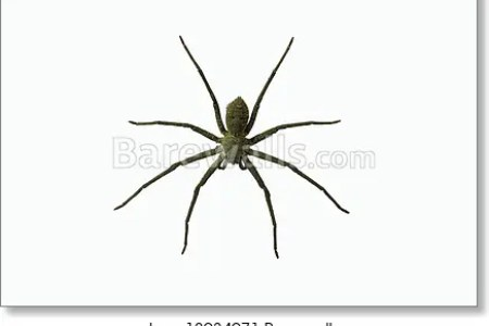interior wolf spider eyes hd images wallpaper for downloads