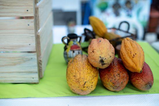 Un primer plano de las mazorcas de cacao, de color naranja y amarillo.