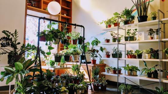 El interior del café con estantes de plantas.