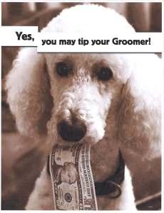 groomer_tip