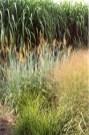 grass blast 7