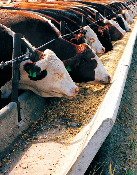 agricultural products for beef and dairy farming