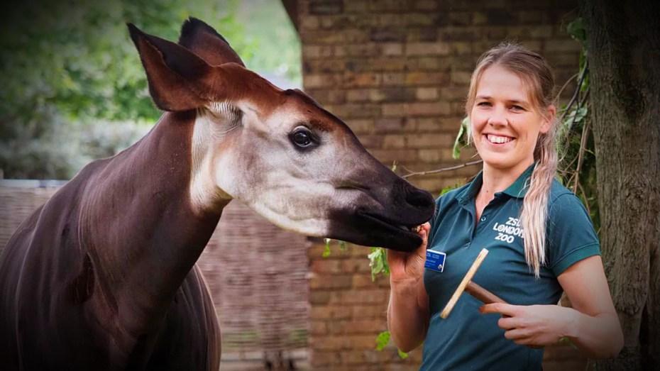 Gemma and Okapi