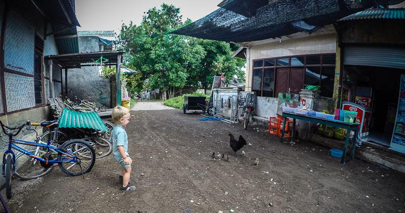 Høns i gaden