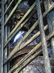 Gammelt lig i bambusbur