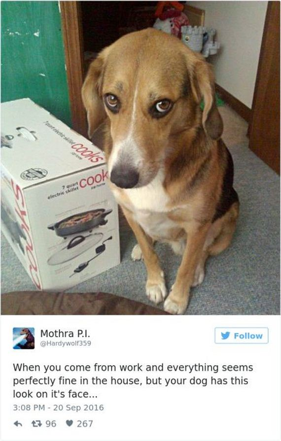 The Best Dog Tweets That The Internet Has To Offer Barnorama
