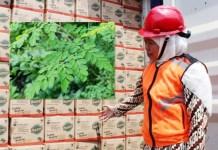 Khofifah saat meninjau komoditas pertanian siap ekspor. Inset: Daun kelor | Foto: Barometerjatim.com/roy hs