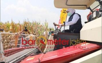 PANEN JAGUNG: Khofifah menjalankan mesin panen jagung saat panen di Bangil bareng PC LPPNU. | Foto: Barometerjatim.com/ROY HS