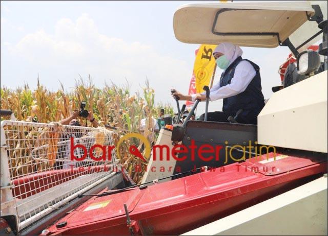 PANEN JAGUNG: Khofifah menjalankan mesin panen jagung saat panen di Bangil bareng PC LPPNU.   Foto: Barometerjatim.com/ROY HS