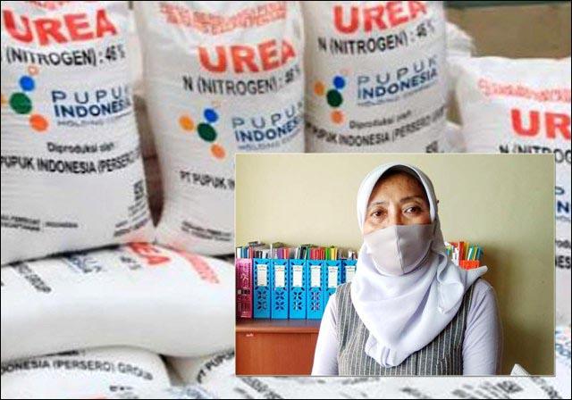 DIKELUHKAN PETANI: Pupuk subsidi menjadi barang langka di Kabupaten Lamongan. Inset: Hartiwi Sistri Utami. | Foto: IST