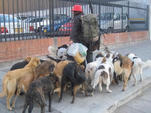 Acacio con perros