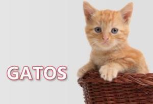 Accesorios ARGOS para Gatos