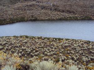 Agua en Bogotá