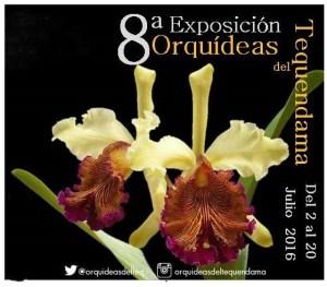 Exposición de orquídeas - copia