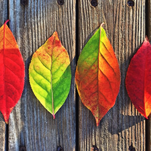 bright autumn leaves laying in a row on wood