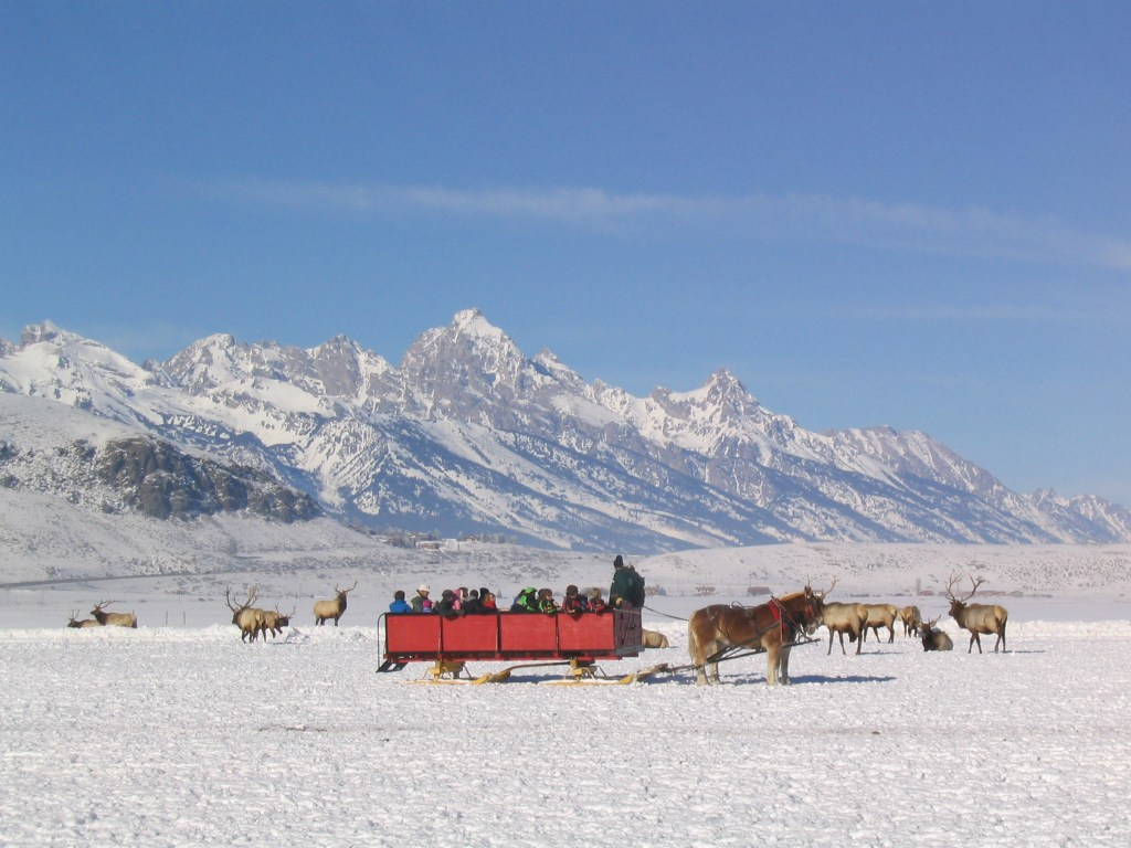 The National Elk Refuge Sleigh Rides is a wildlife activity in the heart of Jackson Hole that you will never forget.