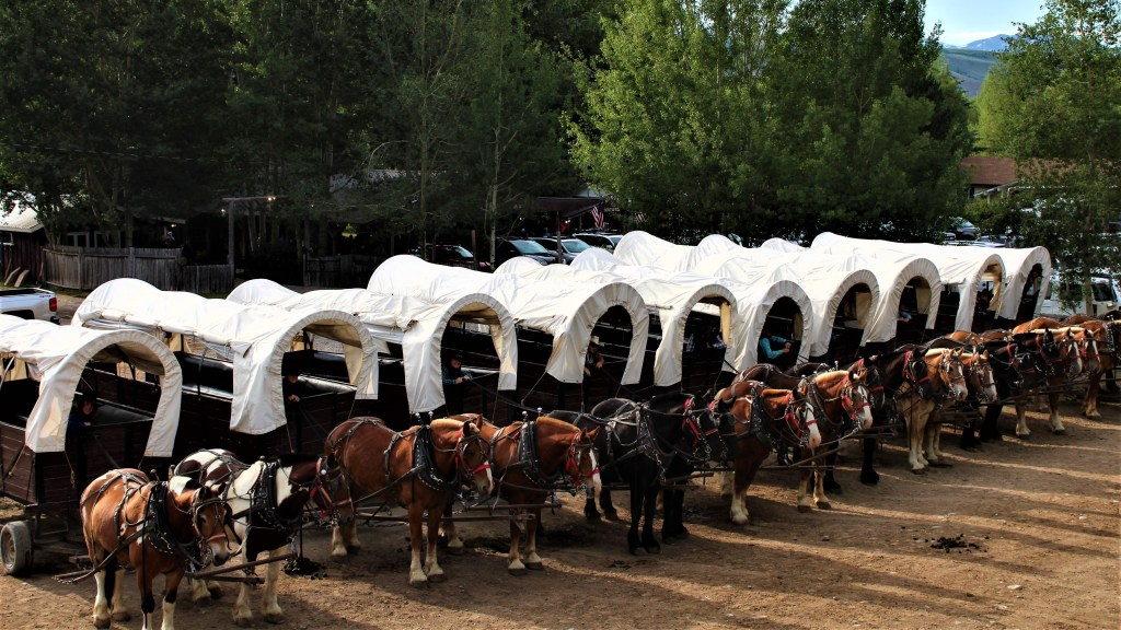 The wagons are lined up ready to take our guests up Cache Creek Canyon to a hearty chuck wagon dinner.