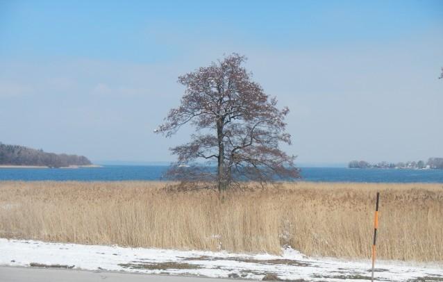 Chiemseebaum