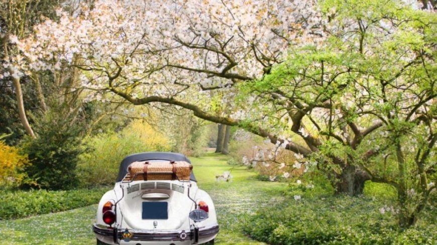 11656 Walking in the forest with the car Spring season 1024x575 1