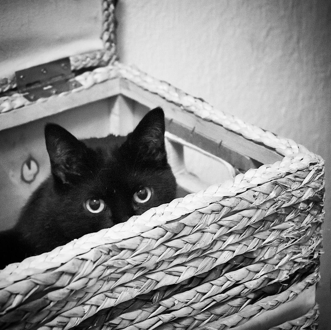 #Inqui in a box; #DSLR #catsagram #BlackCat #blackandwhite
