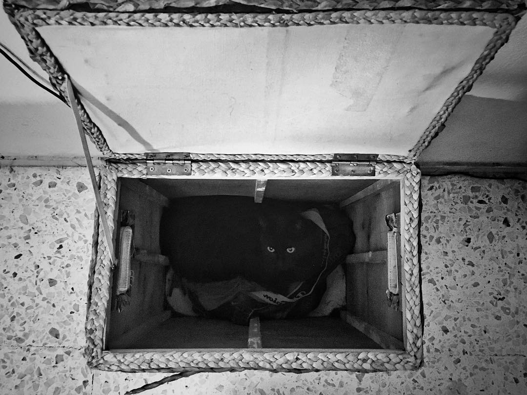 Cat in a basket #Inqui #iPhoneography #blackandwhitephoto #BlackCat #catsagram #7days7photos