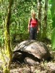 Really big tortoises