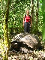 Ze zijn echt reuze, die reuze schidpadden