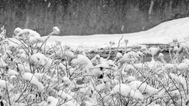 Winter in B&W