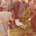 11 Planting Tree