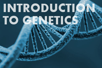 Introduction to genetics