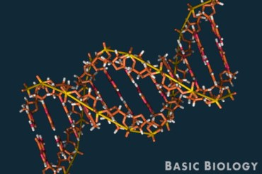 DNA - introduction to genetics