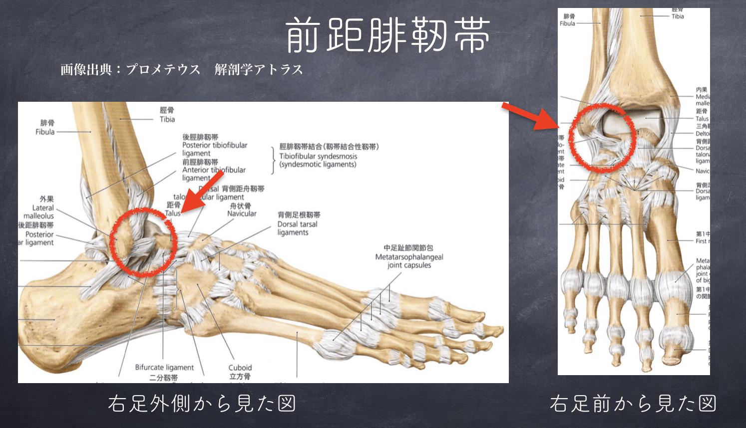 知ってて損なし!「足首ねんざ」の基礎知識