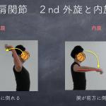 関節運動の正式な呼び方を学ぼう③ 上肢・肩甲帯編