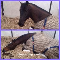 Nestor nap time!