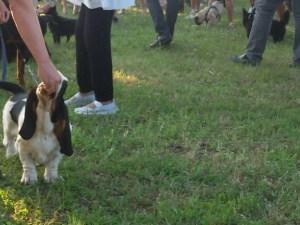 expo-canina-santangelo-niki in ring
