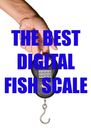 best digital fish scale