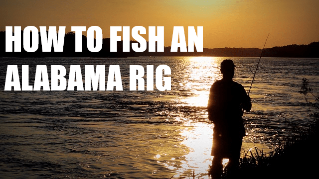 HOW TO FISH AN ALABAMA RIG