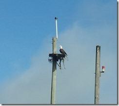 20120919_100204 eagle n