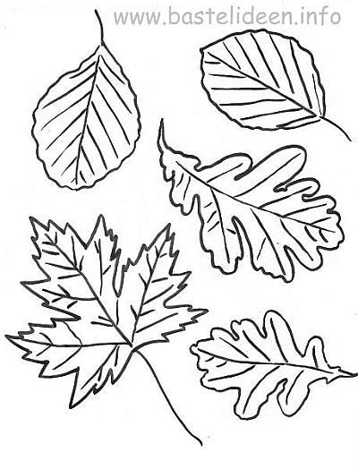 Groartig Herbstbltter Vorlagen Zum Ausdrucken Bilder
