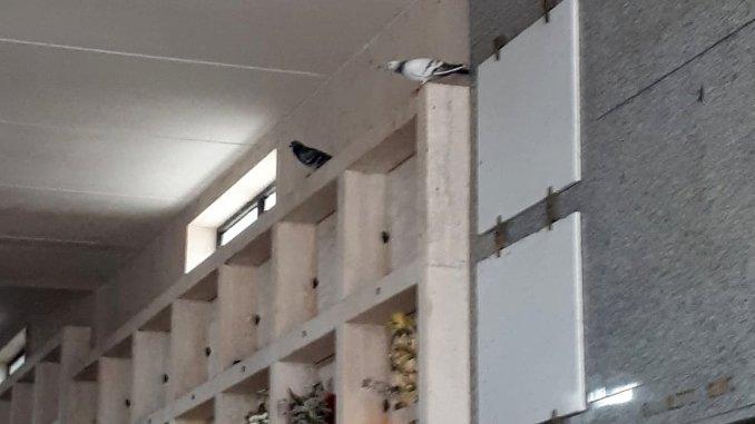 Cimiteri a Bastia Umbria, PD, dove sta la manutenzione?