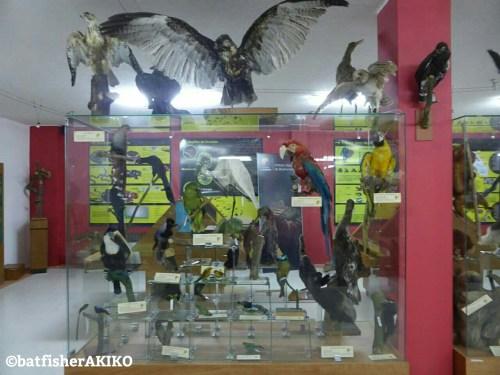 自然科学博物館 鳥類