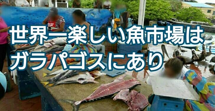 世界一楽しい魚市場はガラパゴスにあり アイキャッチ