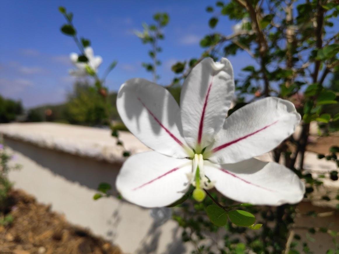 ניסוי הדשנים הגדול! דישון לגינה – אורגני / כימי / ואיזה? ועוד כמה וכמה נושאים